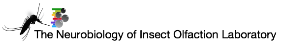 neurobiology_of_insect_olfaction.png