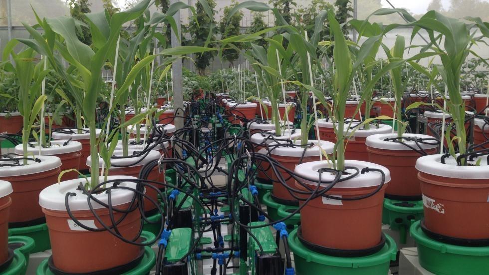icore greenhouse
