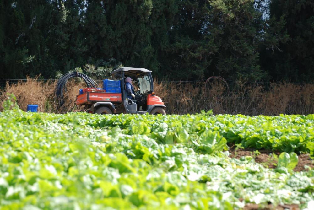 PikiWiki_Israel_39947_Agriculture_in_Israel :טרקטור חקלאות בכפר מל״ל