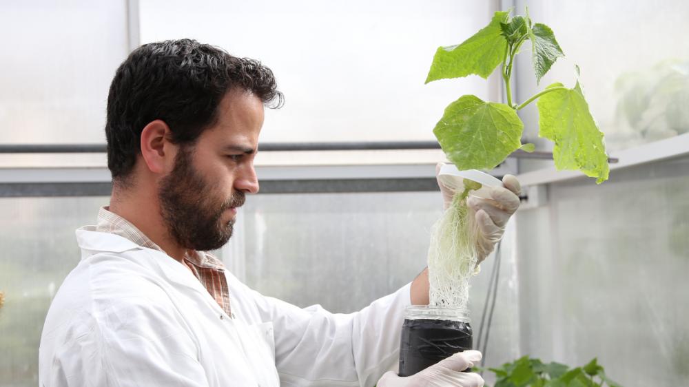 plant-sciences-image.png