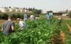 ניסוי שטח בקורס פיזיולוגית הייצור של גידולים חקלאיים